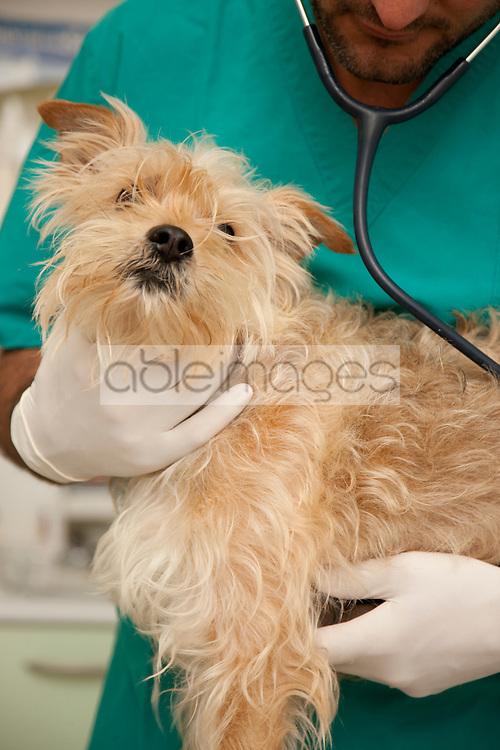 Close up of vet  inspecting dog - headless