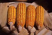 Milho | Corn