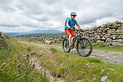 Two male mountain bikers, accompanied by two dogs, cycling along a footpath on the 13th June 2019 near Kentmere in the Lake District in the United Kingdom.