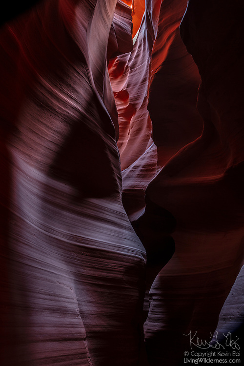 "A passage bends through a very narrow section of Upper Antelope Canyon on Navajo Nation land near Page, Arizona. Violent flash floods sculpt the sandstone, leaving undulating, layered walls. The Navajo people call the canyon Tsé bighánílíní dóó Hazdistazí, which means ""the place where water runs through rocks."""