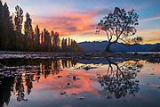 Sunset Silhouettes & Reflections at the Wanaka Willow Tree, New Zealand