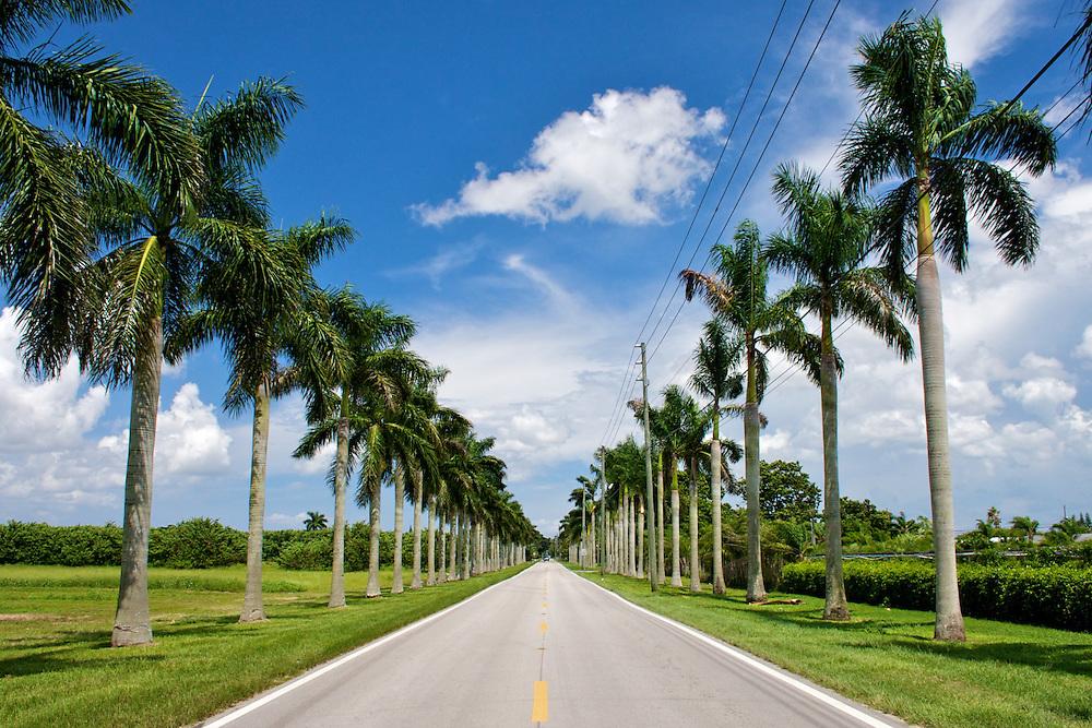 Palm Tree Farm, Miami-Dade County, FL 8/08