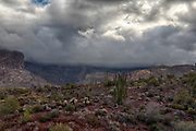 Storm building up  in Organ Pipe Cactus National Monument, southern Arizona.