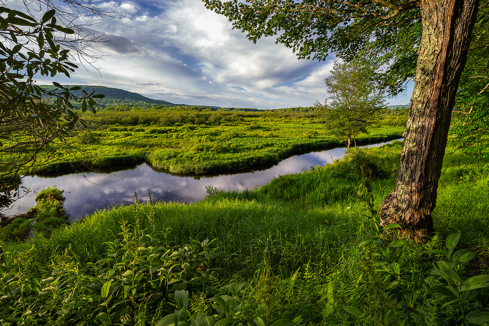 Low evening light covers the lush green scenery along the Blackwater River, reflecting the gently clouds on a pleasant summer evening in Canaan Valley State Park, West Virginia.