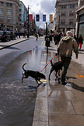A pet owner and his dogs reach the pavement after running through a puddle left by seasonal Spring rainfall on Oxford Street, on 24th May 2021, in London, England.