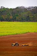Sao Jose do Rio Preto_SP, Brasil...Programa Biota da Unesp, na foto plantacao de cana...The Biota program of Unesp, in this photo the sugar cane agriculture...Foto: JOAO MARCOS ROSA / NITRO