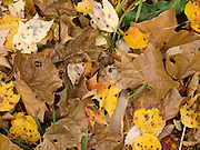 close up of autumn leaves on grass