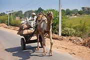 Indian man drives camel cart in Sawai Madhopur in Rajasthan, Northern India