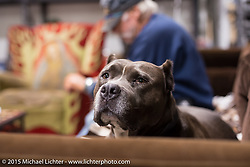 Bill Dodge's dog Buddy in his Blings Cycles custom shop during Daytona Beach Bike Week 2015. FL, USA. Monday March 9, 2015.  Photography ©2015 Michael Lichter.