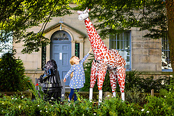 © Licensed to London News Pictures. 26/07/2021. Settle UK. 6 year old Scarlet plays with a Giraffe made entirely of flowerpots this morning at the Settle Flowerpot festival which runs from July to August in the Yorkshire market town. Photo credit: Andrew McCaren/LNP