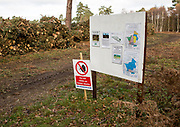 Forestry tree felling signs to create more heathland habitat, on Upper Hollesley Common, Suffolk, England, UK