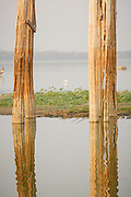 A pair of teak bridge struts on the U-Bein bridge, partly eroded by both the water andthe many moluscs living in the lake.