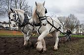 Ruskin Shire Horses