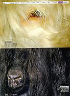 Publication: FOCUS Magazine (Poland) No.5/188, May 2011,  Photography by Heidi & Hans-Jürgen Koch/heidihanskoch.com