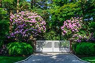 Spring, Flowers blooming, Gate, Halsey Neck Lane, Southampton, NY