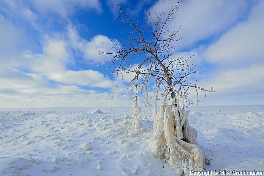 Ice on tree on shore of Lake Winnipeg, Victoria Beach, Manitoba, Canada