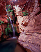 Elves Chasm, Royal Arch Creek, Colorado River mile 116.5, Grand Canyon National Park, Arizona, USA; 6 May 2008, Pentax 67II, 45mm lens, Velvia 100