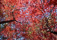 Fall Garden and Botanicals