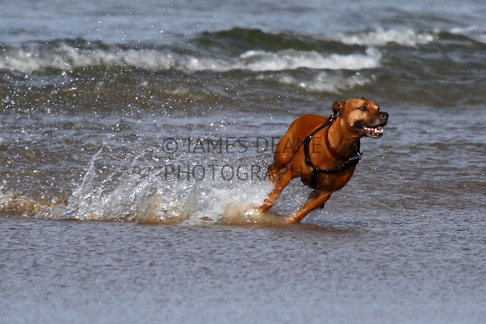 My own dog, Ellie. I am also available to photograph client's dogs here on Islay