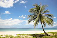 Isolated palm tree on an exotic beach, Palawan Island, Philippines, Southeast Asia