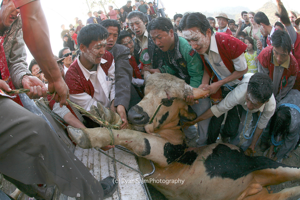 Tagin villagers load up a recently sacrified mithun at the close of the Si Donyi festival.