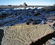 Ozette Indian Whale Petroglyph at Low Tide, Olympic National Park, Washington