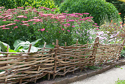 Woven willow hurdles used as edging with Achillea millefolium 'New Vintage Rose' and 'New Vintage Violet'