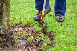 Defining a lawn edge around a tree using a half-moon cutter