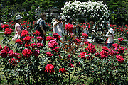 people photographing in rose garden