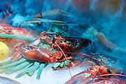 Kreeft - Lobster