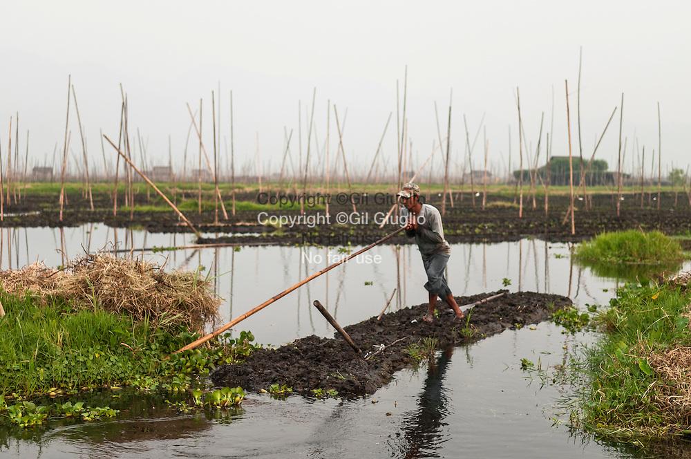 Myanmar, état shan, jardins potagers flottants de l'etnie inthas au nord ouest du Lac Inlé // Myanmar, Shan state, floating vegetable gardens of Inthas ethnic group at north east of Inle lake