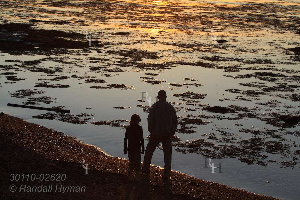 Father and daughter, silhouetted by sunset waters, walk along Seltjarnarnes coast in midsummer; Reykjavik, Iceland.
