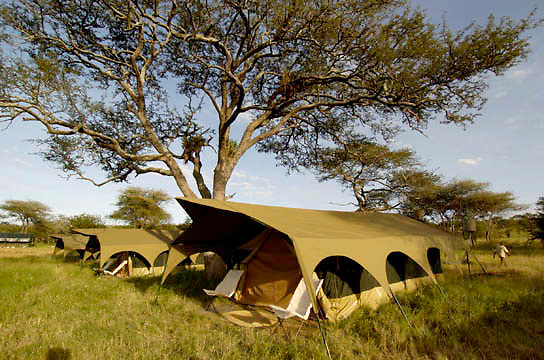 Mobile tent camp in Tansania. Visitors following the wildebeest migration in February. Africa.
