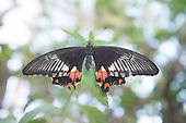 Carleton University Butterfly Show