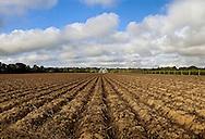 New York, East Hampton, Farm, South Fork, Long Isalnd