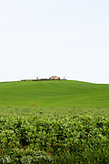 A hilltop villa crowns a green Tuscan estate near the town of Pienza, Val d'Orcia region, Siena, Tuscany, Italy.