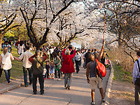 http://Duncan.co/cherry-blossoms-at-high-park