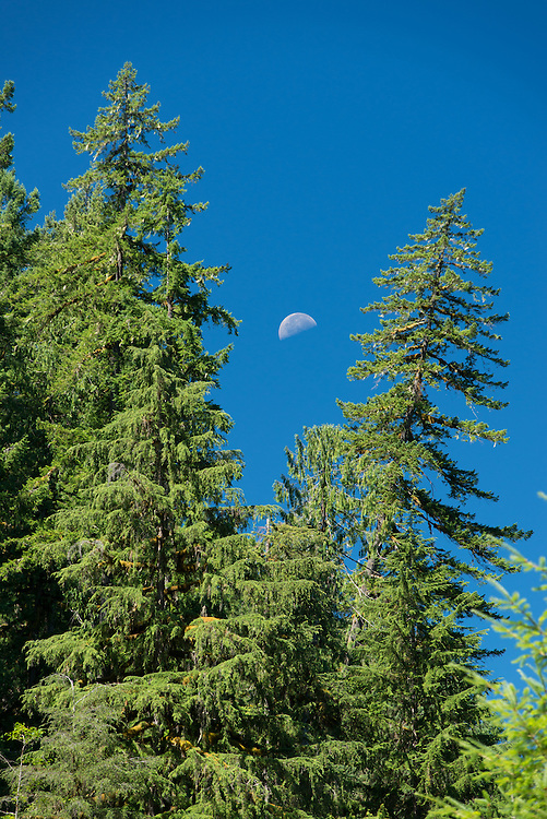 Half moon over forest, Cascade Range, Oregon.