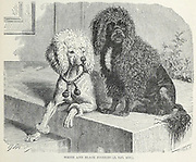 White and Black Poodles From the book ' Royal Natural History ' Volume 1 Section II Edited by  Richard Lydekker, Published in London by Frederick Warne & Co in 1893-1894