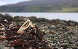 THEMENBILD - Verschmutzung der Weltmeere, ein Plastikkanister am Strand bei der Ortschaft Stein, Isle of Skye, Schottland, aufgenommen am 10. Juni 2015 // Plastic Pollution in Oceans, a plastic can on the beach, Stein, Scotland on 2015/06/10. EXPA Pictures © 2015, PhotoCredit: EXPA/ JFK