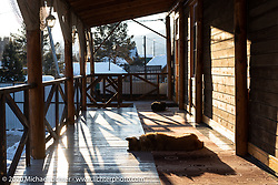 Local dogs laze away the afternoon at the Baikal Mile host hotel in Maksimiha, the Kumutkan Hotel, Siberia, Russia. Tuesday, February 25, 2020. Photography ©2020 Michael Lichter.