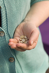 A handful of pumpkin seeds