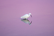 Photography: Color, Digital on Aluminium, Canvas, Forex or photographic paper.<br /> <br /> A heron in the Venetian lagoon!<br /> <br /> PRICE: 150,00 €<br /> Shipping included<br /> 7 day money-back guarantee<br /> <br /> <br /> <br /> Styles:<br /> <br /> Fine Art<br /> Minimalism