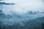 Cloud forest canopy<br /> Western slopes of Andes<br /> Andes<br /> ECUADOR, South America
