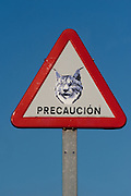 Lynx warning traffic signs<br /> Doñana National & Natural Park. Huelva Province, Andalusia. SPAIN<br /> 1969 - Set up as a National Park<br /> 1981 - Biosphere Reserve<br /> 1982 - Wetland of International Importance, Ramsar<br /> 1985 - Special Protection Area for Birds<br /> 1994 - World Heritage Site, UNESCO.<br /> The marshlands in particular are a very important area for the migration, breeding and wintering of European and African birds. It is also an area of old cultures, traditions and human uses - most of which are still in existance.<br /> <br /> Mission: Iberian Lynx, May 2009<br /> © Pete Oxford / Wild Wonders of Europe<br /> Zaldumbide #506 y Toledo<br /> La Floresta, Quito. ECUADOR<br /> South America<br /> Tel: 593-2-2226958<br /> e-mail: pete@peteoxford.com<br /> www.peteoxford.com
