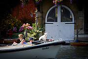 Henley-on-Thames, United Kingdom, General View, Dog keeping watch on the Bow of a leisure boat,  2017 Henley Royal Regatta, Henley Reach, River Thames. <br /> <br /> 13:12:39  Sunday  02/07/2017   <br /> <br /> [Mandatory Credit. Intersport Images.