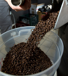A cascade of freshly roasted Ethiopian coffee beans pour out of the roaster at Devout Coffee, Tuesday, April 5, 2016, in Fremont, Calif. (Photo by D. Ross Cameron)
