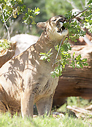 OKC Zoo - 5/15/2012