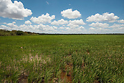 Rice Cultivation along the Ireng River bordering<br /> Guyana.<br /> BRAZIL<br /> South America