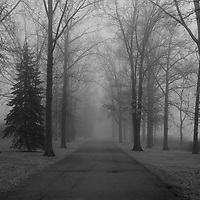 """""""To Where it Leads"""" 2 B&W<br /> <br /> Where does this lead? No one knows! Thick fog engulfs everything along this tree lined road!!<br /> <br /> All about Fog by Rachel Cohen"""